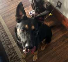 Jax - Adopted 10/13/19