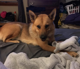 Gabrielle - Adopted 8/23/19