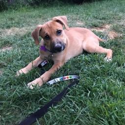 Simba - Adopted 9/8/19